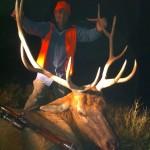 Good Bull Elk