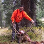 Back Country Bull Elk