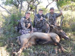 First Bull Elk