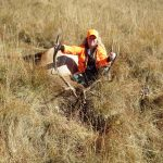 Bull Elk Drop Camp